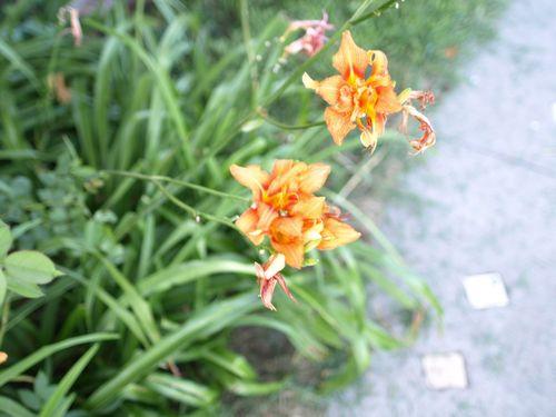 Flower 008