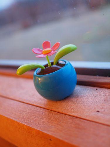 Springbox 004