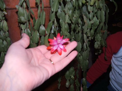Cactus 007