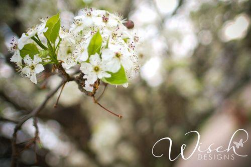 Wwtree-1
