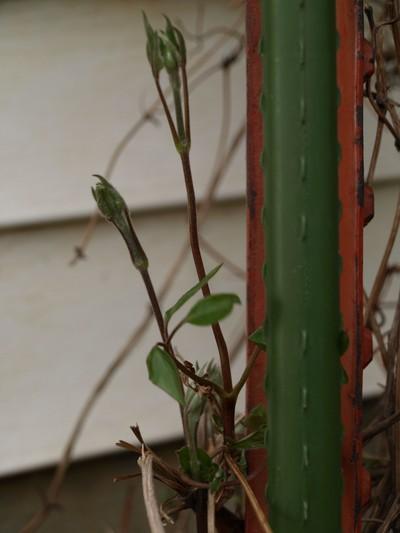 Plantsandoutside_008