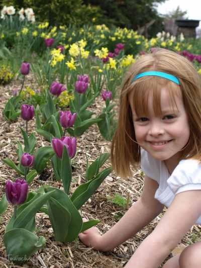 Tulips_005copyr
