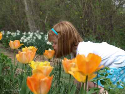 Tulips_087copyr