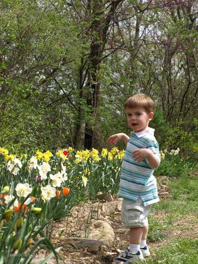 Tulips_097copyr