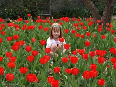 Tulips_106copyr